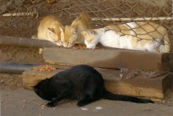 Feral Cats of Maui -- Look 'Em In The Eye