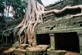 Roots of Banyan Trees Strangle  a Ta Prhom Building