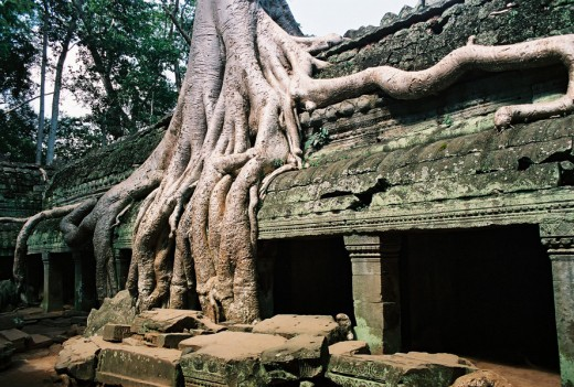 Roots of Banyan Trees Strangle  a Ta Prhom Building