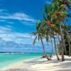 Island Dreamer profile image
