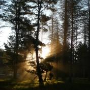 Mystic Travellers profile image