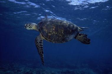 Lava one moment, sea turtle next.