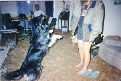 A True Story About a Border Collie, A Very Lucky Dog