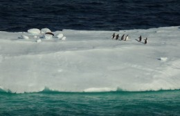 A sea lion and several penguins on an iceberg in the Gerlache Straight