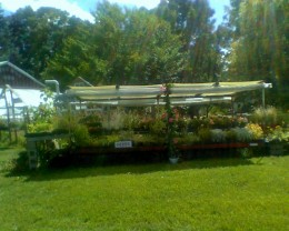 Flower carts outside the farm stand