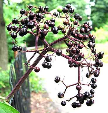 The full yummy berries