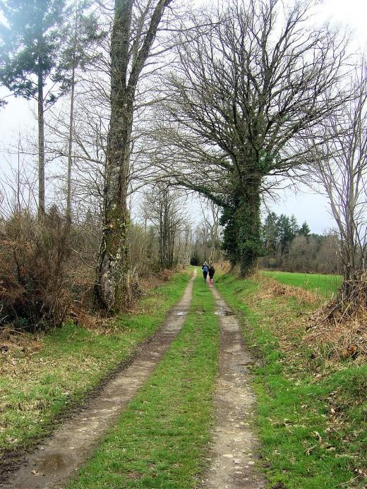 The start of the Serpentine walk