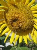 Flowers that Grow from Seed. Gardening With Children. Easy to plant and grow flower seeds.
