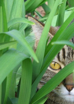 Cat Deterrents for Gardens - What Should I Use?