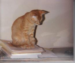 helping me study