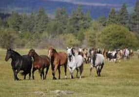 Stable horses at Black Butte