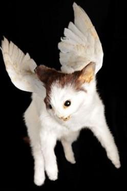 Flying Vampire Kitten