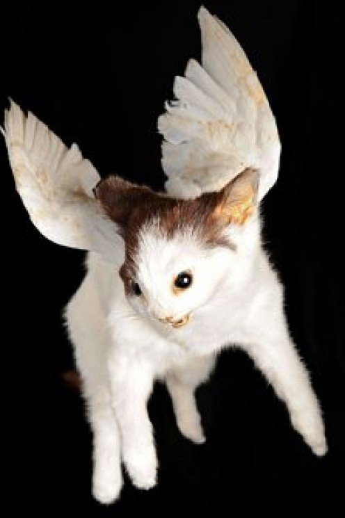Flying Vampire Kitten