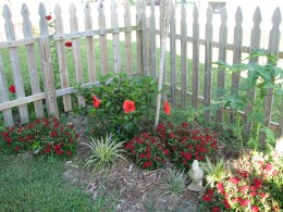 Backyard picket fence,