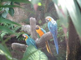 Tropical birds,