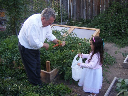Dad sharing some of his home grown vegetables with a great granddaughter.