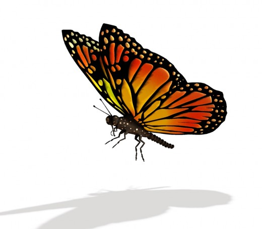 Egg  Caterpillar  Chrysalis - Butterfly?