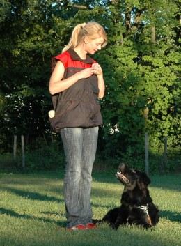 Dog training can be done with the help of training collars.