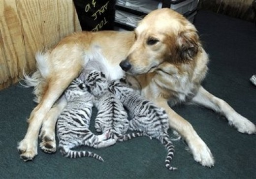 Now who says dogs and cats don't get along?