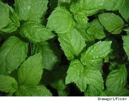 mint is used to make a rinse