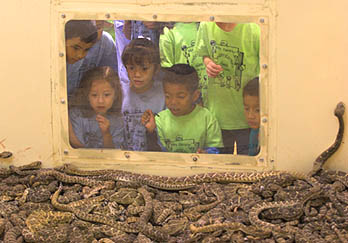 Children looking in a pit of rattlers.