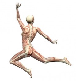 Apple Cider Vinegar Helps Keep Your Skeletal System Strong