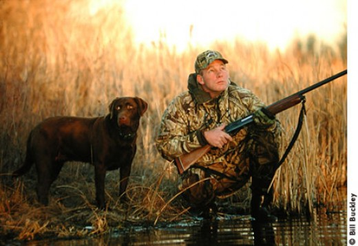 Gun dog faithfully waits to do his job as his master gets ready to shoot.