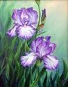 Sharon's Irises