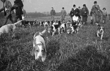 Teacup beagles will love the outdoors.