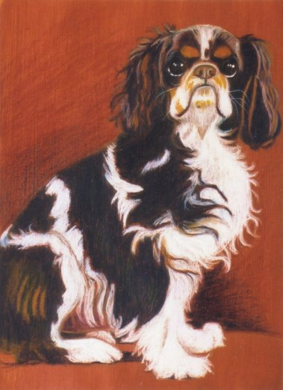 """Duke"", a King Charles Spaniel. Commissioned Portrait, Prismacolor colored pencils."