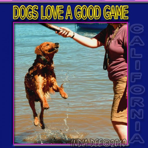 Golden Retrievers are some of the best water dogs on earth, so toss a stick in the lake and watch his instincts blossom!