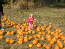 My daughter searching for her pumpkin