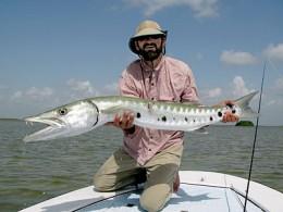 The Global Barracuda