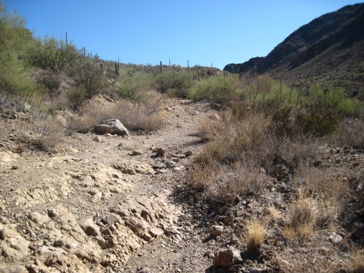 A view of the Trail as we head away from the trail head.