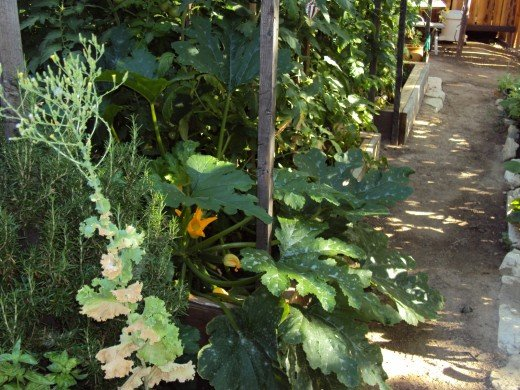 Walking down the garden path past the tomatoes and the squash.