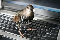 My writing partner is not bird-brained!