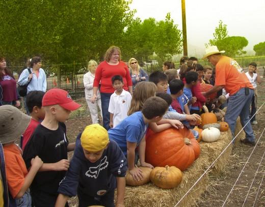 A great place for an educational farm experience, The Peltzer Pumpkin Farm in Temecula.