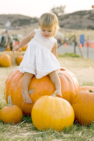 From the biggest to the smallest, Peltzer Pumpkin Farms meets all your pumpkin needs.