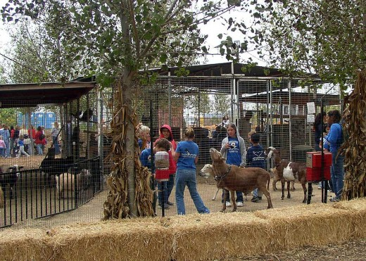 Come and feed the gentle animals on the Peltzer Farm.