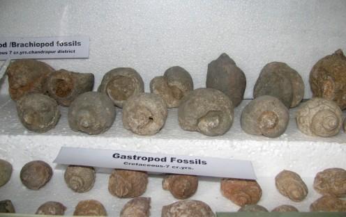 Gastropoda fossils