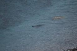 Seals amongst the wild wild surf