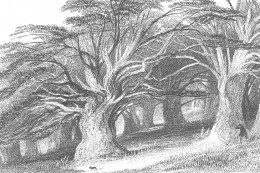 When the Romans came into power they burned down all of Druids sacred groves though out Britian