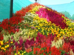 Flower Show at Glass House,Lal Bagh