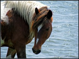 Pony.      Photo by: diskychick