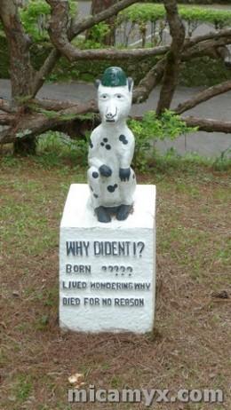 Taken from Camp John Hay's Pet Cemetery in Baguio City. Photo by Senyorita.net