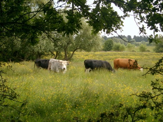 The grazing marshes
