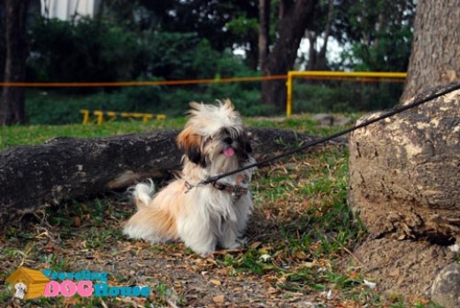Shantee in UP Diliman's Sunken Garden. Photo By http://travelingdoghouse.com/