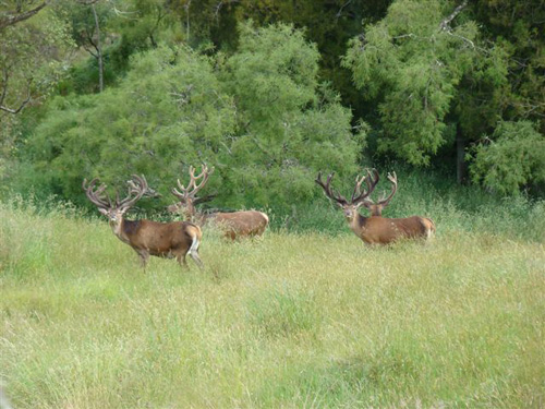 Deerhunter's Edge Hunting Predictor finds the deer activity for you