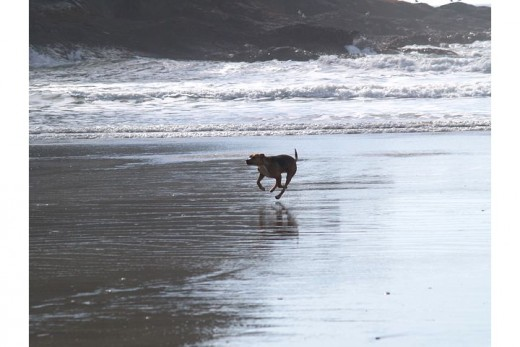 Dog-friendly Oregon Coast
