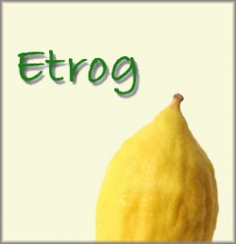 Etrog (a citrus fruit similar to a lemon native to Israel; a citron in English)